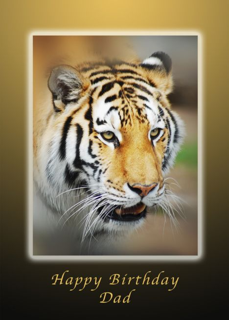 Tiger Happy Birthday Dad  Father card