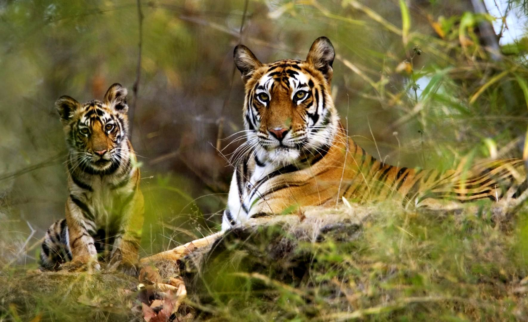 Kanha National Park is one of the biggest park in Madhya