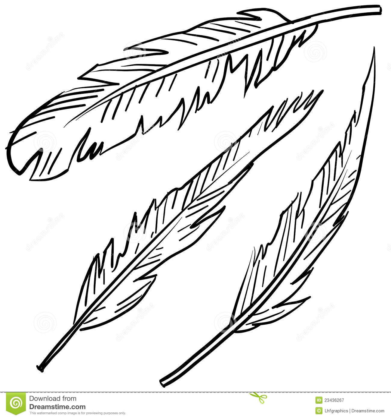 - Feather Coloring Page (With Images) Feather Illustration