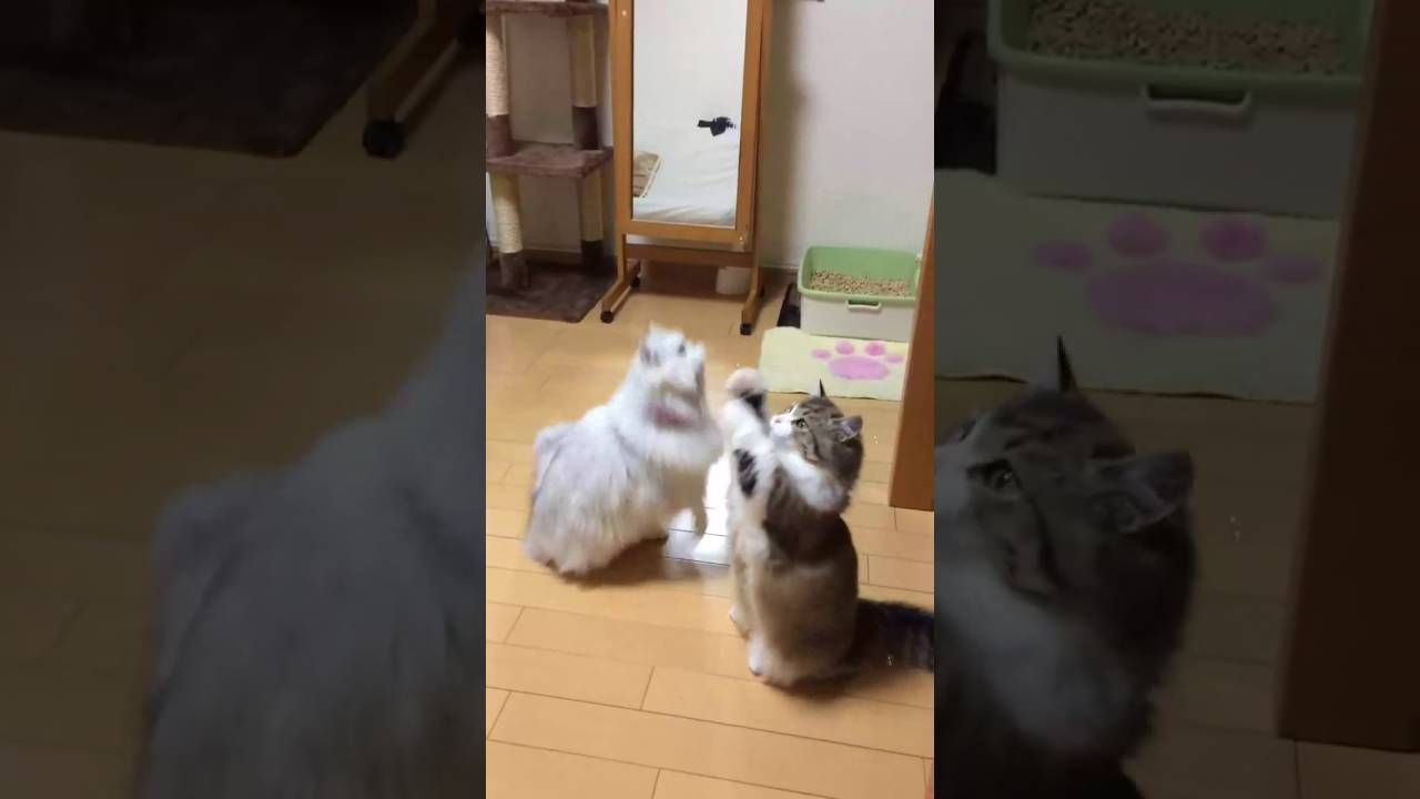 Two Cat Can't Stop Playing With Bubbles