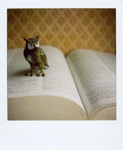 owl on page - by elizabeth soule
