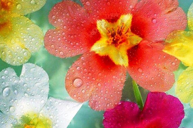 Terapia floral: en qué consiste, propiedades de cada flor. :: SerFelices.org