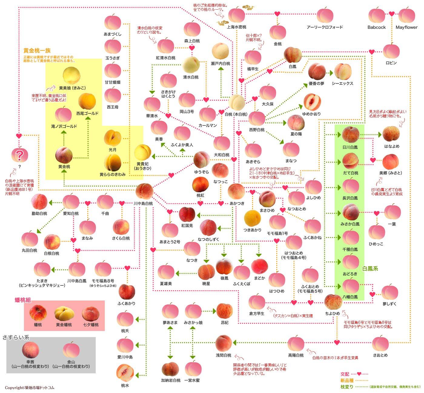 169 フォーエバーマイフレンド 桃 品種 家系図 桃