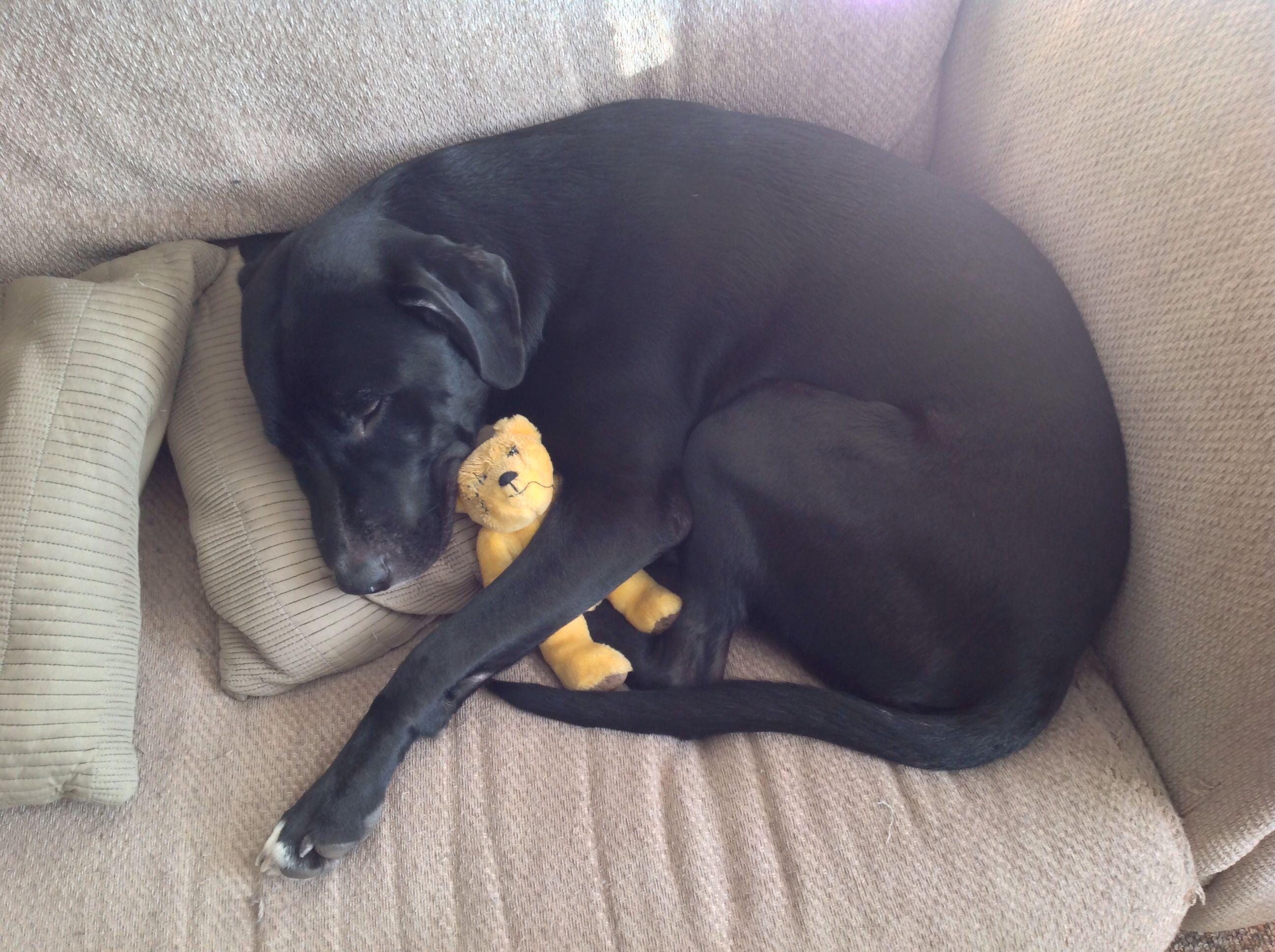Sleeping puppy and his teddy bear | Sleeping puppies ...