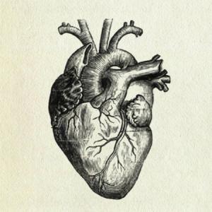 8d498d815c7ffe6a31e4a6adf7d6927d a labeled diagram of the human heart high quality tattoos