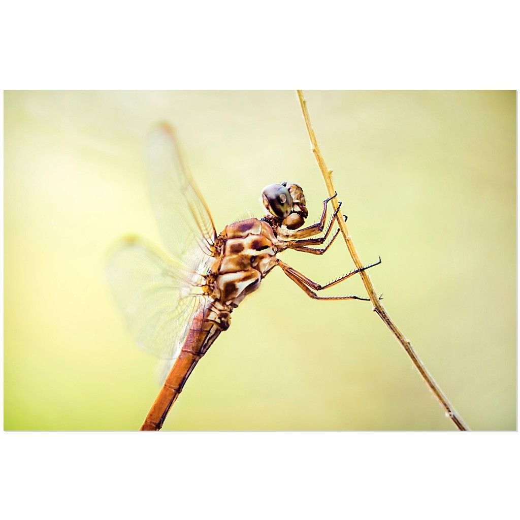Awesome Dragonfly Metal Wall Art Gallery - The Wall Art ...
