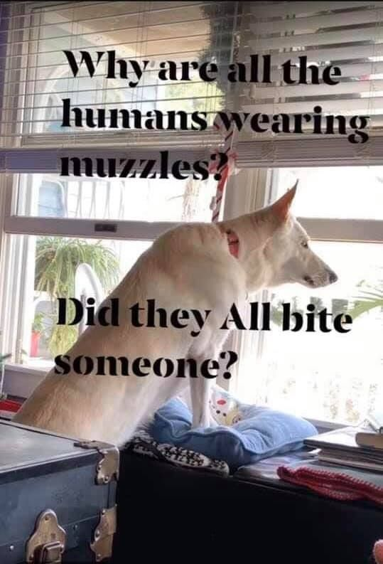 Your Pet Is Spiritually Communicating With You Funny Animal Memes Funny Dog Memes Funny Animal Pictures