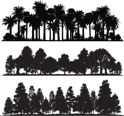 Very High Detail Silhouettes Of Tropical Temperate And Cold