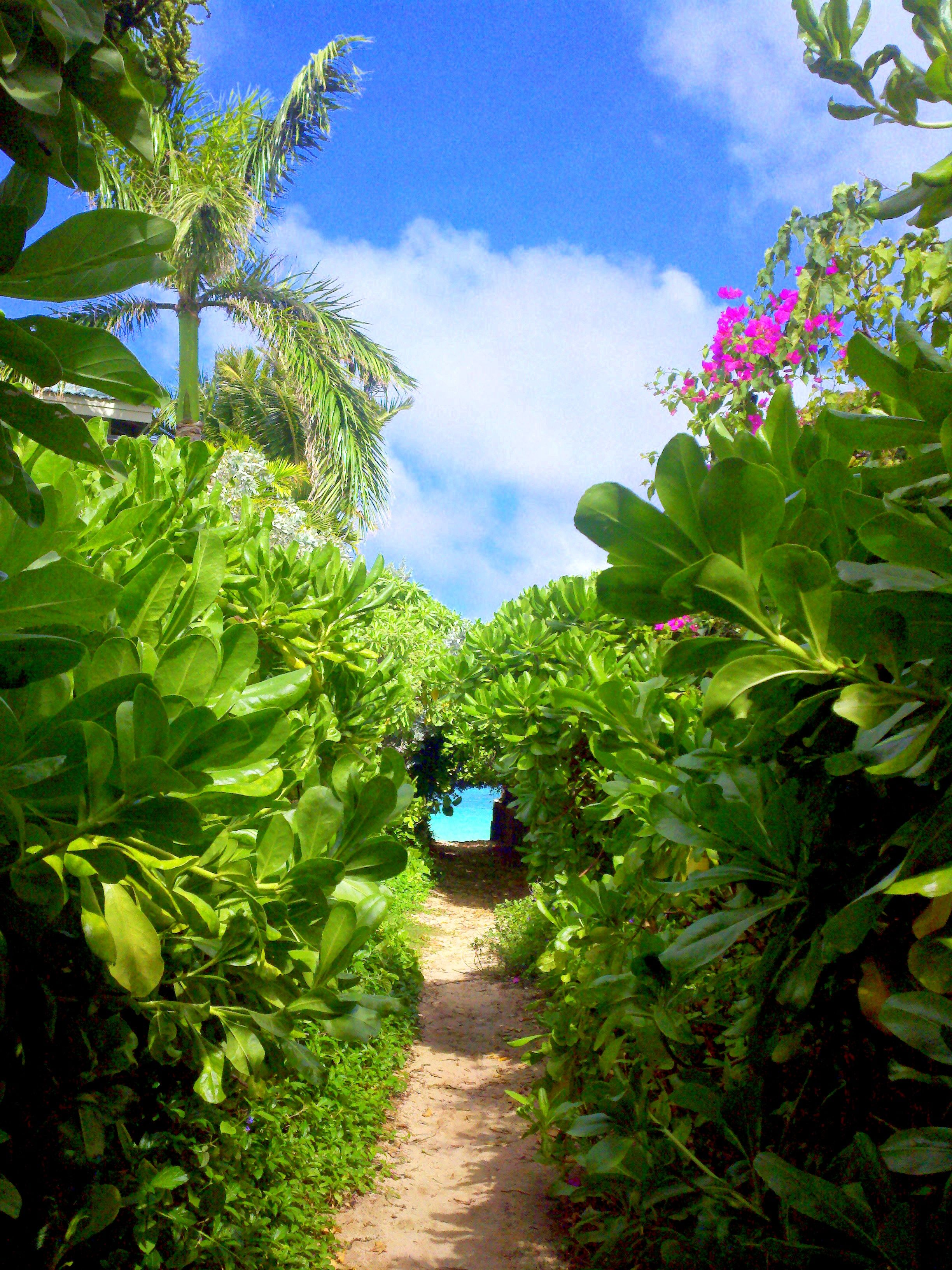 Lanikai beach Oahu HI,I remember so clearly walking thrOUGH HERE JUSTTO GET TO THE BEACH...........