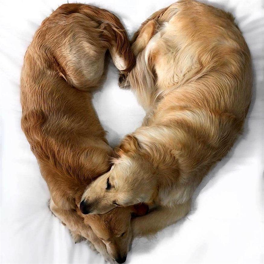 Photo of 😍 #cachorros #animales