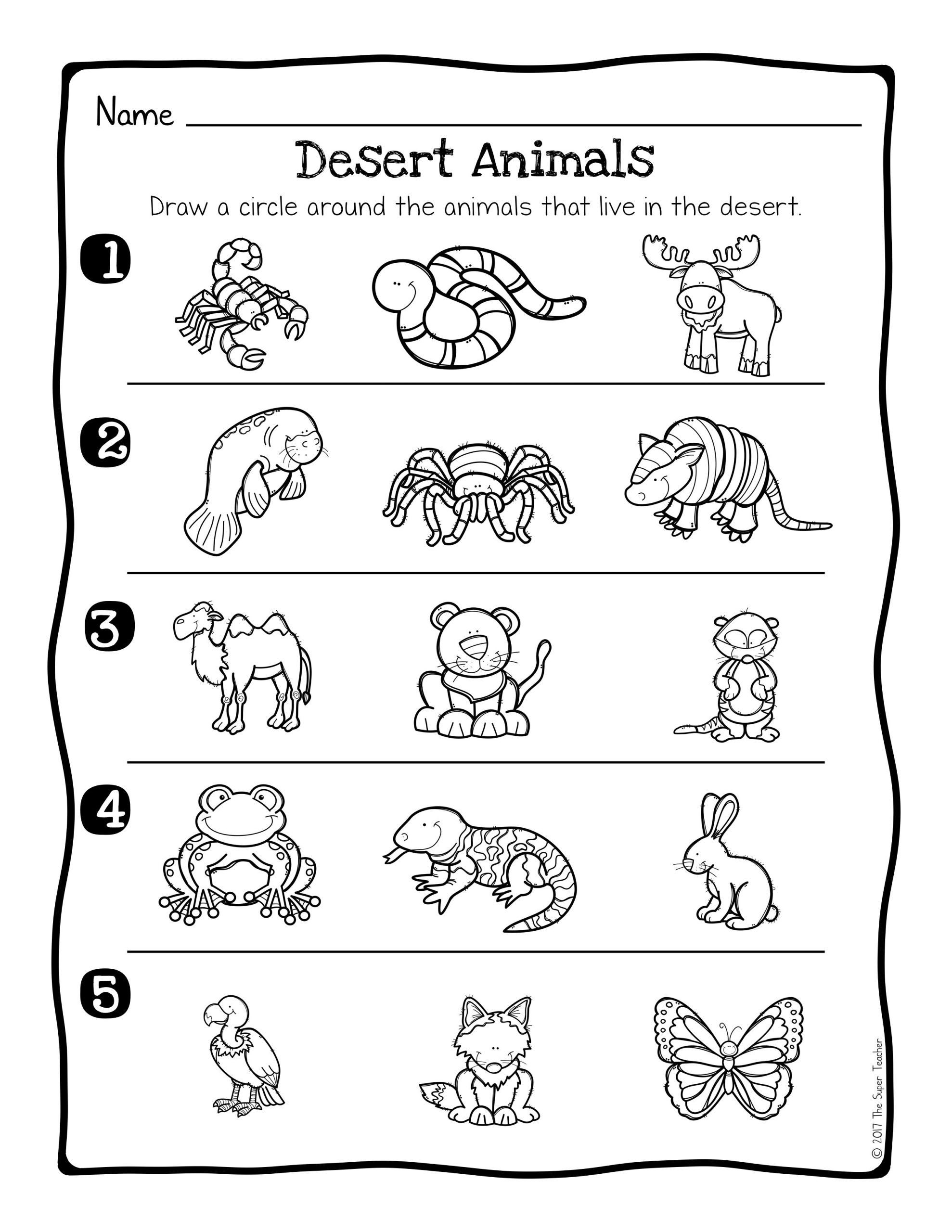hight resolution of Georgia Habitats Worksheets Free   Printable Worksheets and Activities for  Teachers