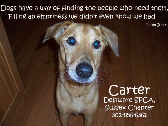 Carter Is Available For Adoption At The Georgetown Shelter Delaware Spca Please Call If You Are Interested In Having Carter A Spca Animal Companions Delaware