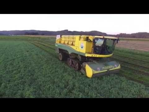 Video: Flåde af høstmaskiner imponerer - sidste omgang i det grønne guld   Landbrugsavisen