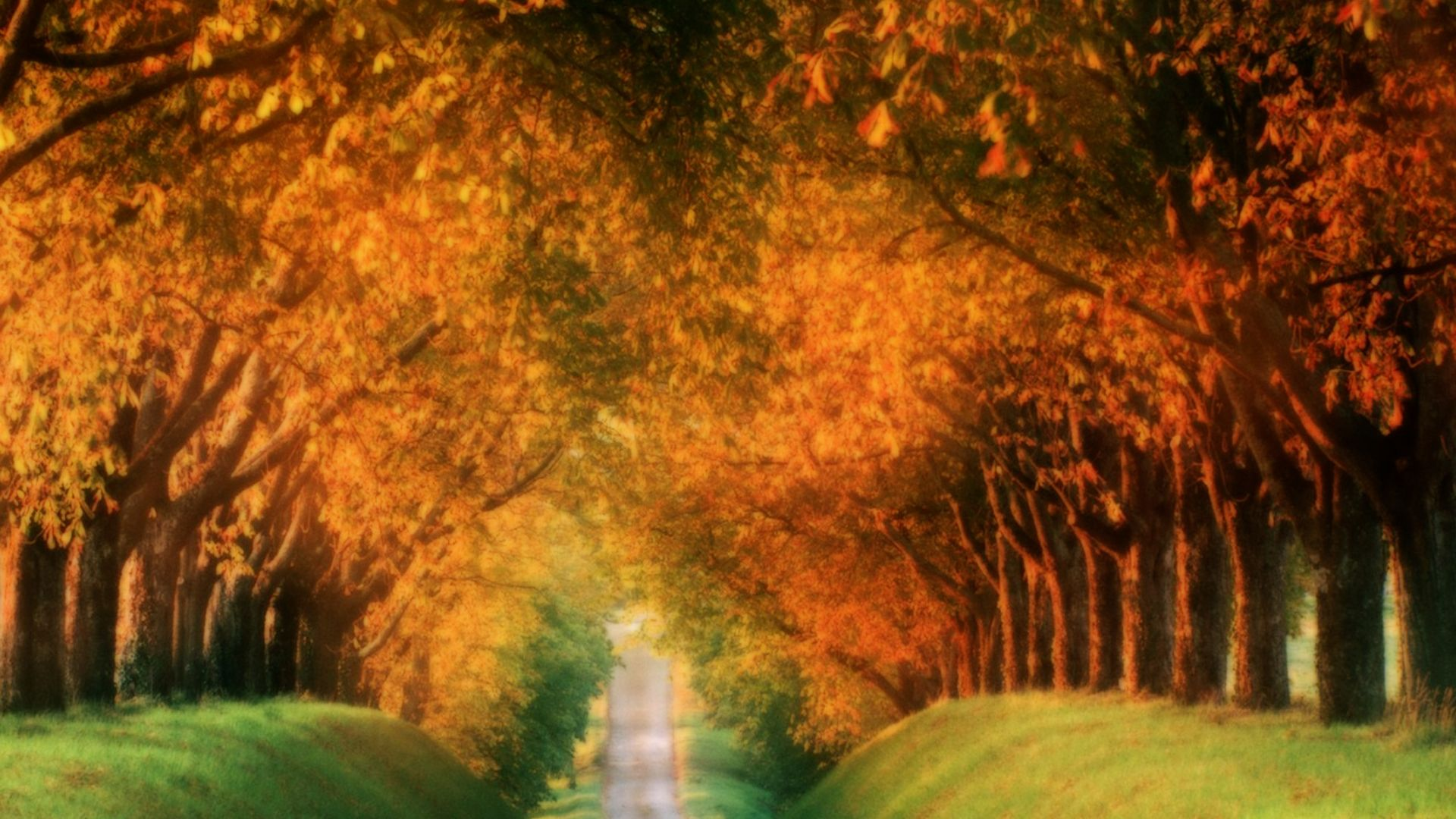 wallpapers autumn road cognac region france papeis desktop image france world landscapes