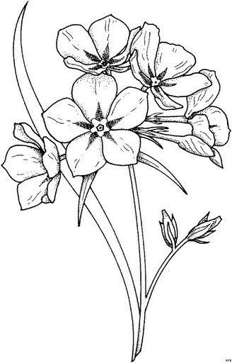 pinwe3sew4u on flori  flower drawing flower sketches