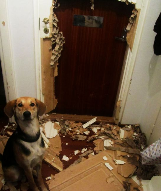 Messiest Pets Ever Cute Animals Funny Animals Dog Fails