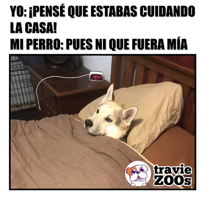 Cierra La Puerta Haz De Cenar Y No Me Molestes Memes De Perros Chistosos Memes Perros Perros Chistosos