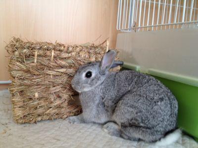 はるちゃんの日曜日 うさぎのはるちゃん うさぎ 可愛すぎる動物 ウサギ