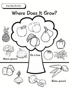 Unit of Inquiry - Food Study - From Farm To Fork - Where Does It ...