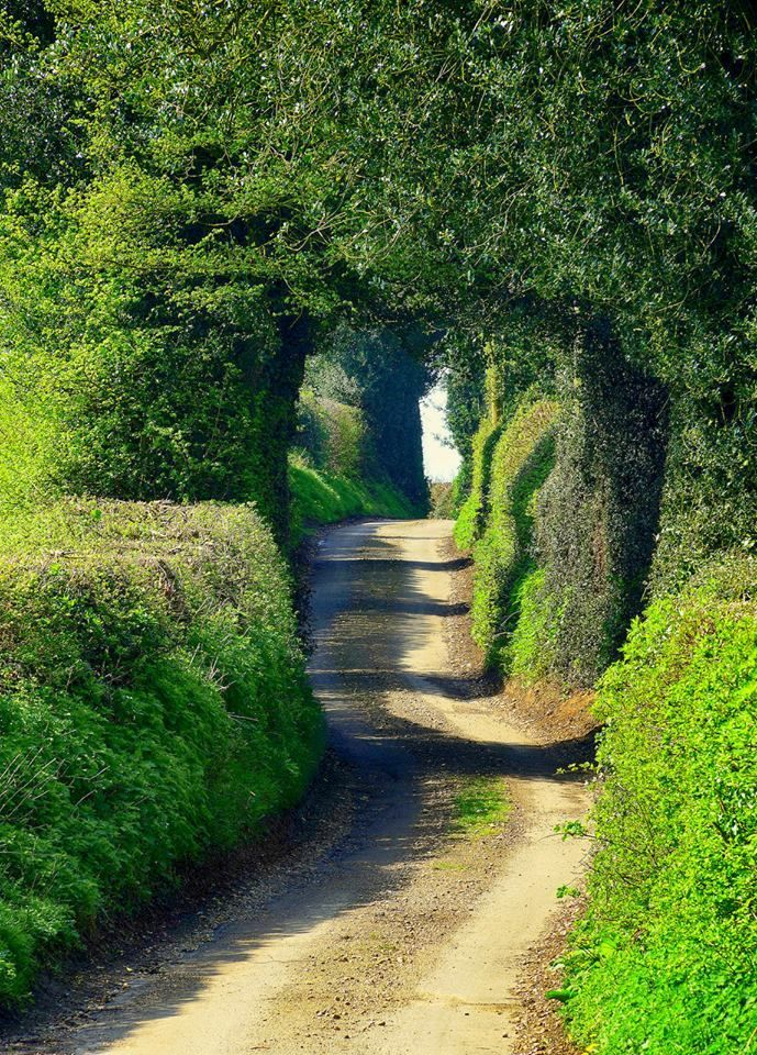 Winding country lane near Welwyn Garden City in