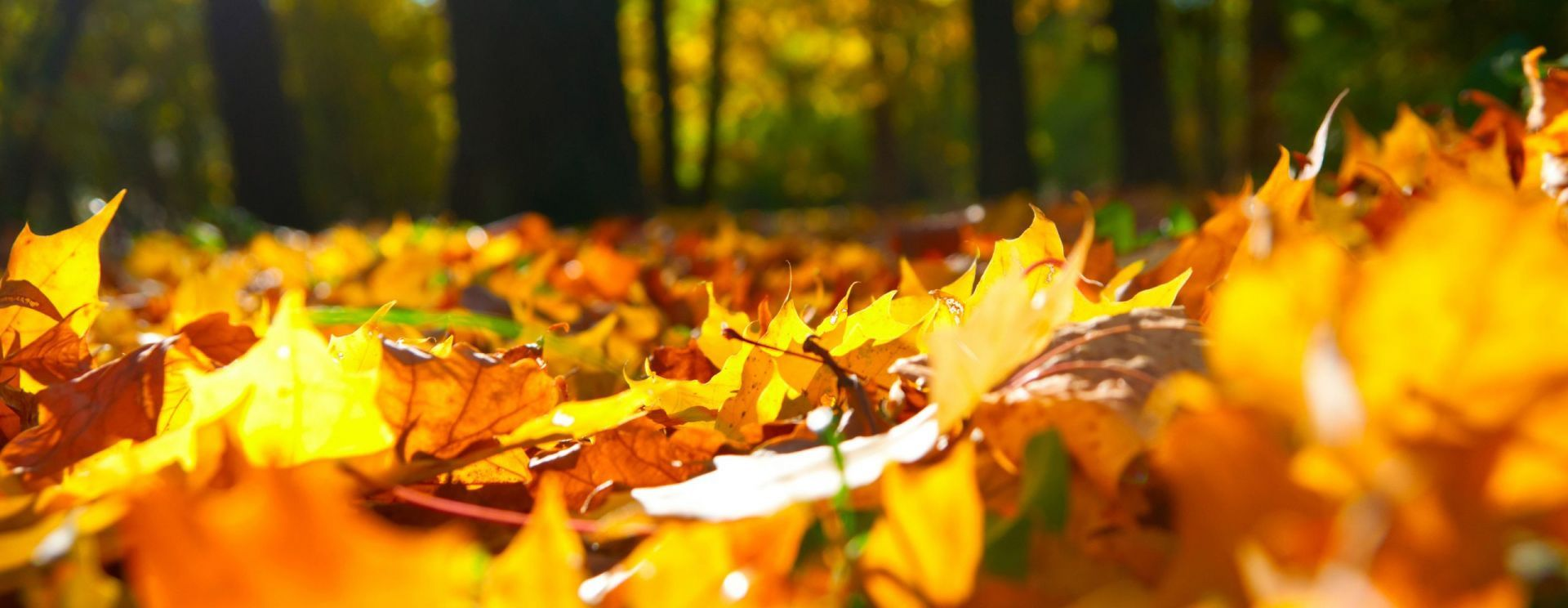 Windows 10 Wallpapers Leaf Compost Autumn Leaves Fall Background