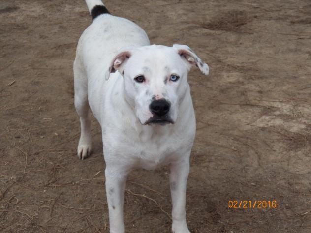 Adopt Delilah Adoption Pending On Labrador Retriever Retriever Mix Dogs