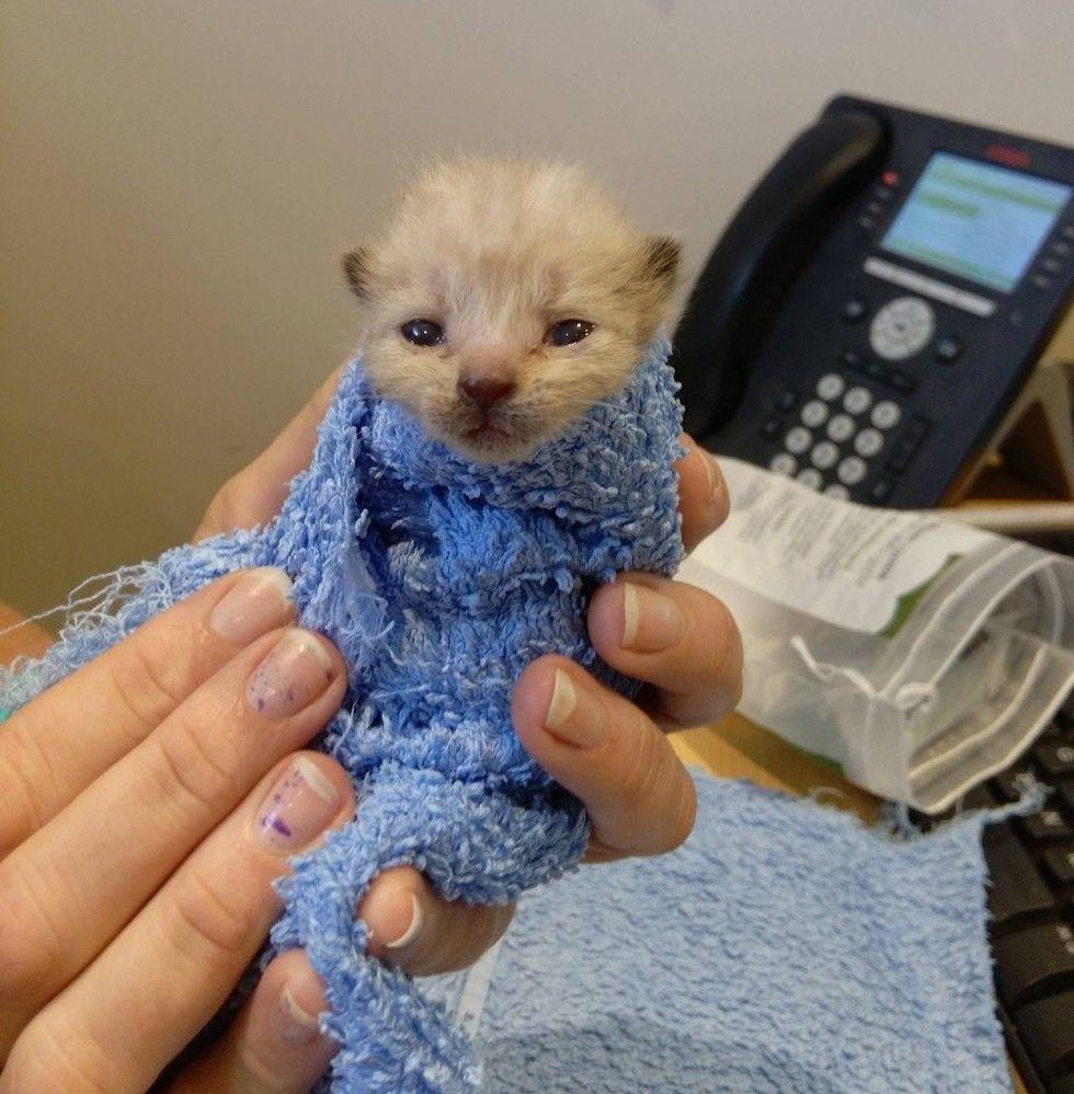 Kitten Who Cheated Death Gives Comfort To Other Kitties Just Like Him Kitten Care Kitten Newborn Kittens