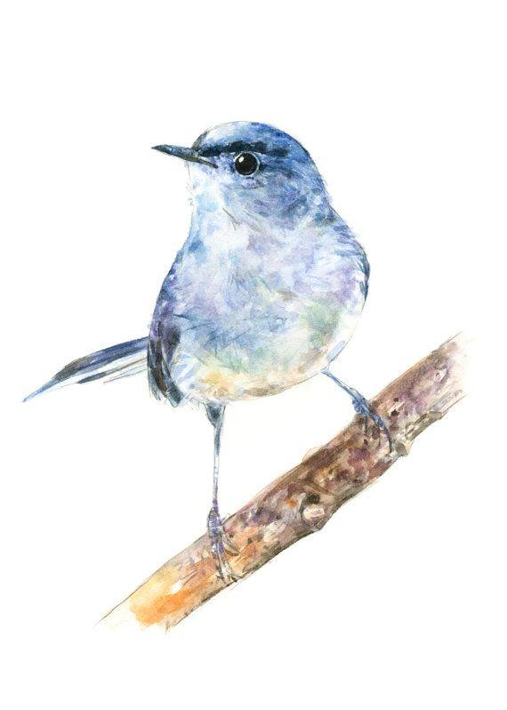 Bleu Gris Gobemoucheron Peinture A L Aquarelle Aquarelle Oiseau