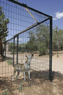 Best dog fence options