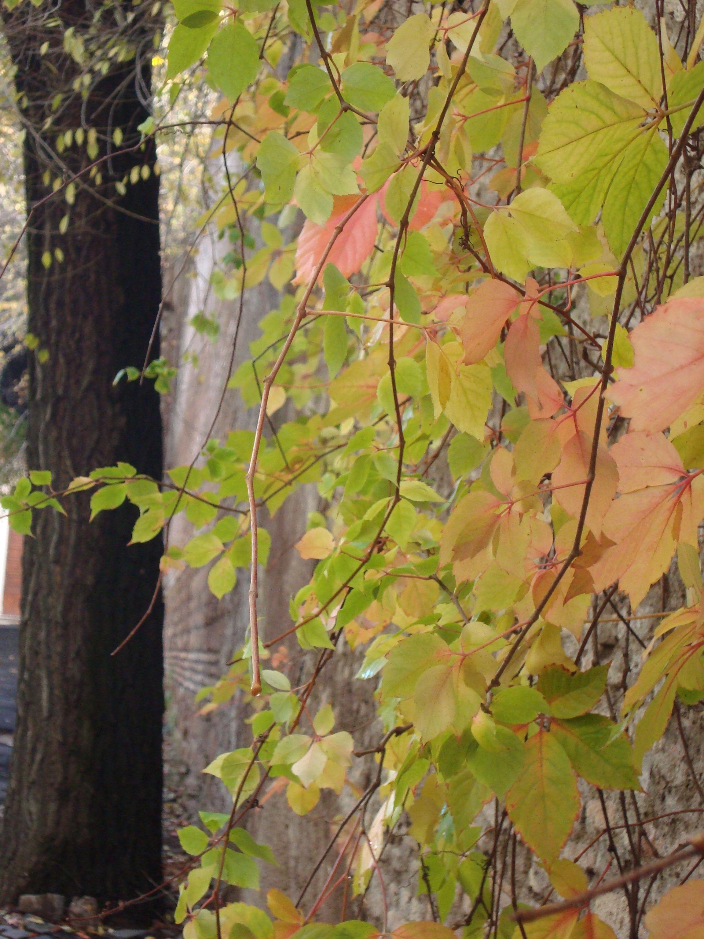 more colors of fall in december