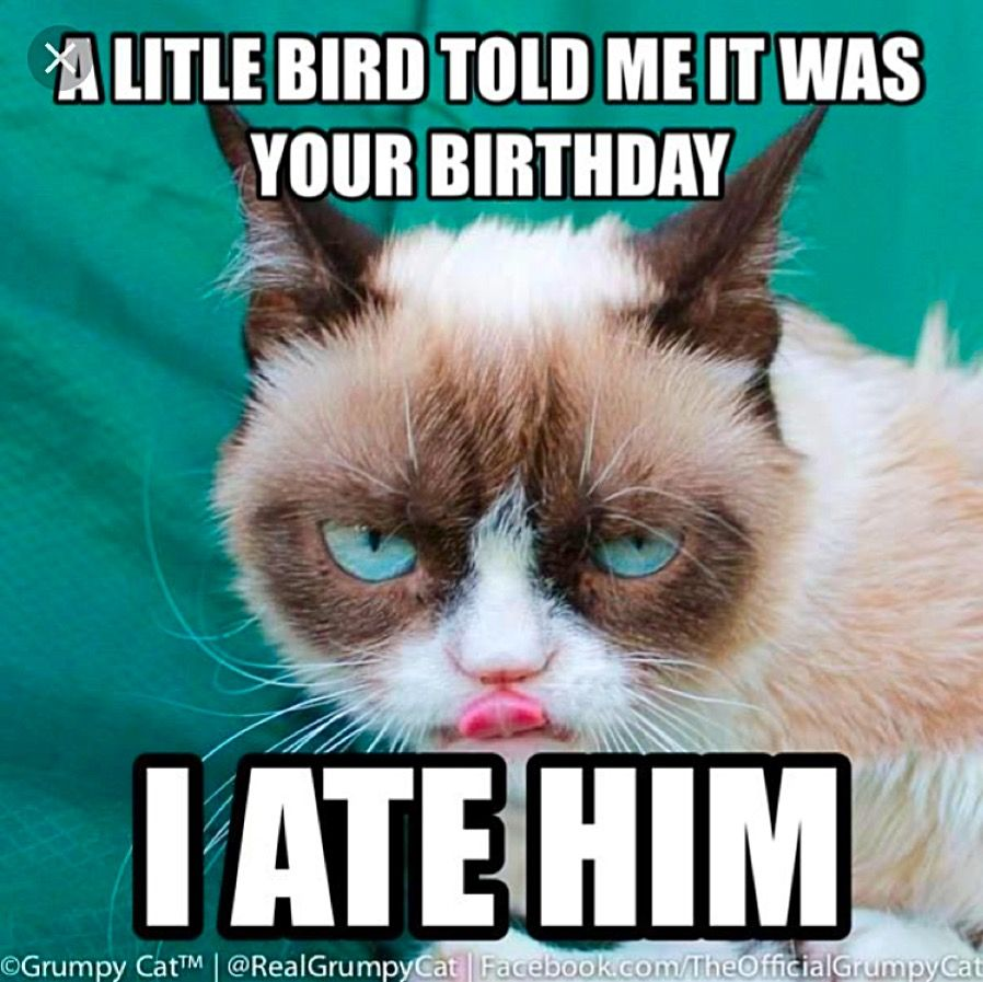 Funny Belated Birthday Wishes Pin Bridgette Kearns Angry Cat Grumpy