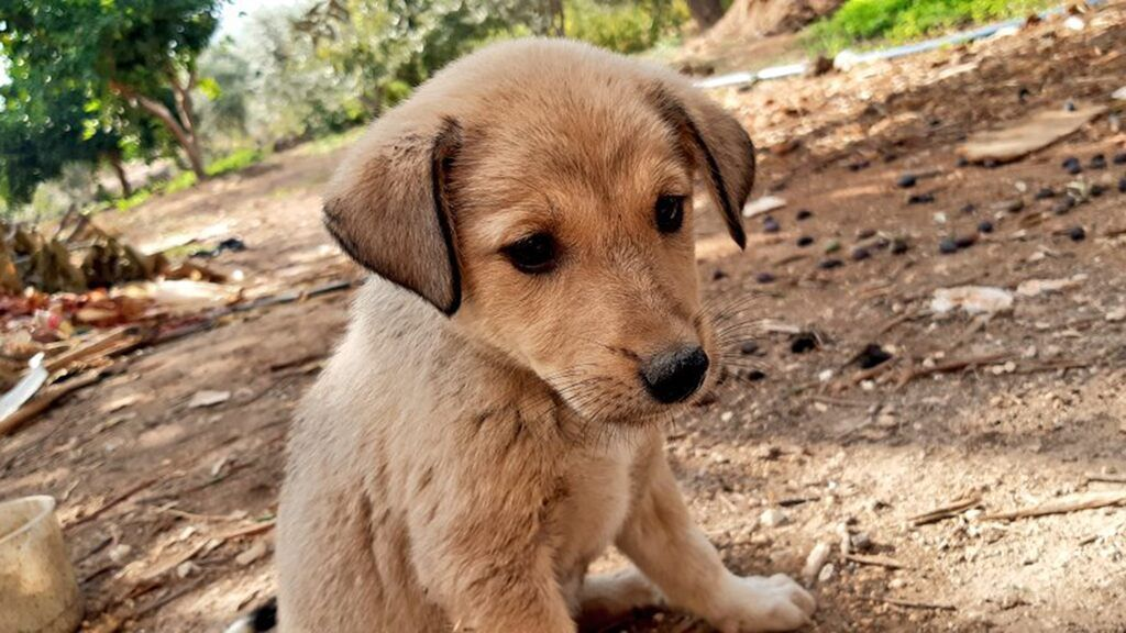 Puppy orphaned in Baghdadi raid finds furever home