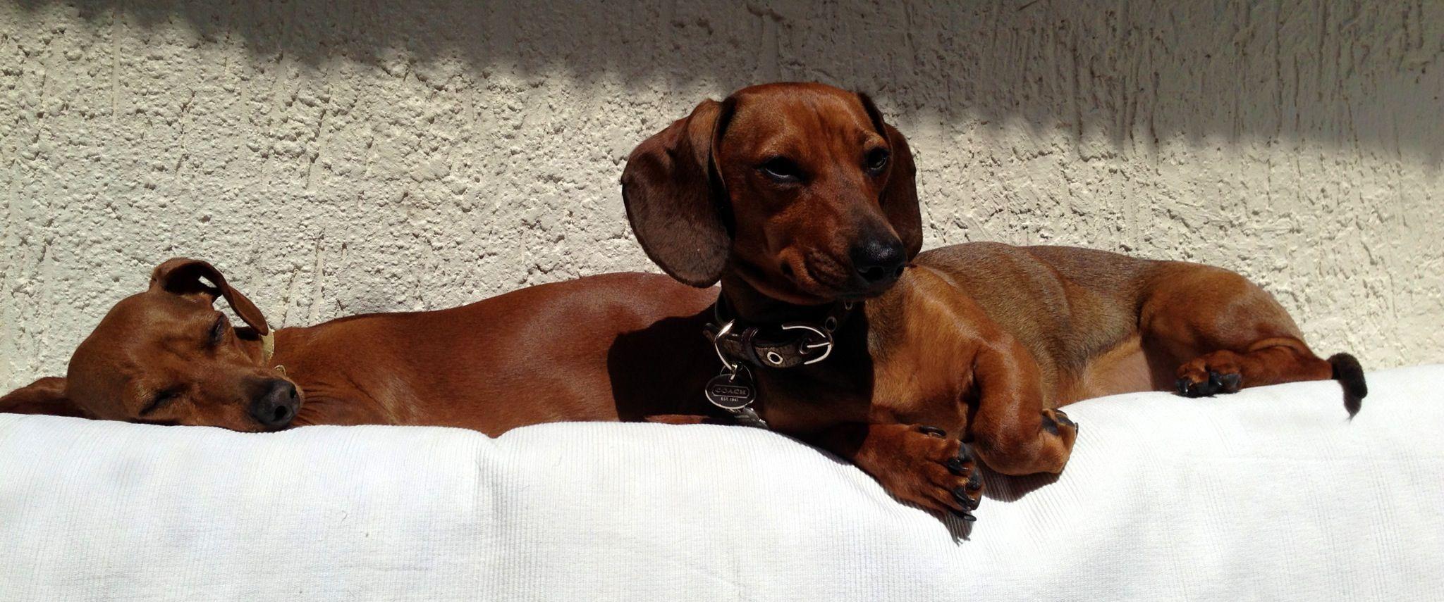 Camila & nina sunbathing