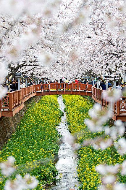 Primavera en Jinhae, Corea del Sur