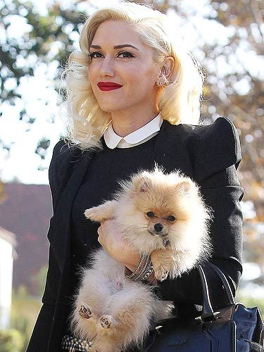 Photo of Gwen Stefani & her Dog Chewy