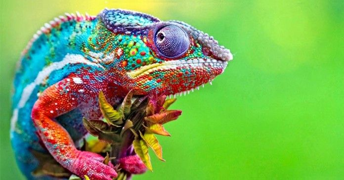 chameleon summary