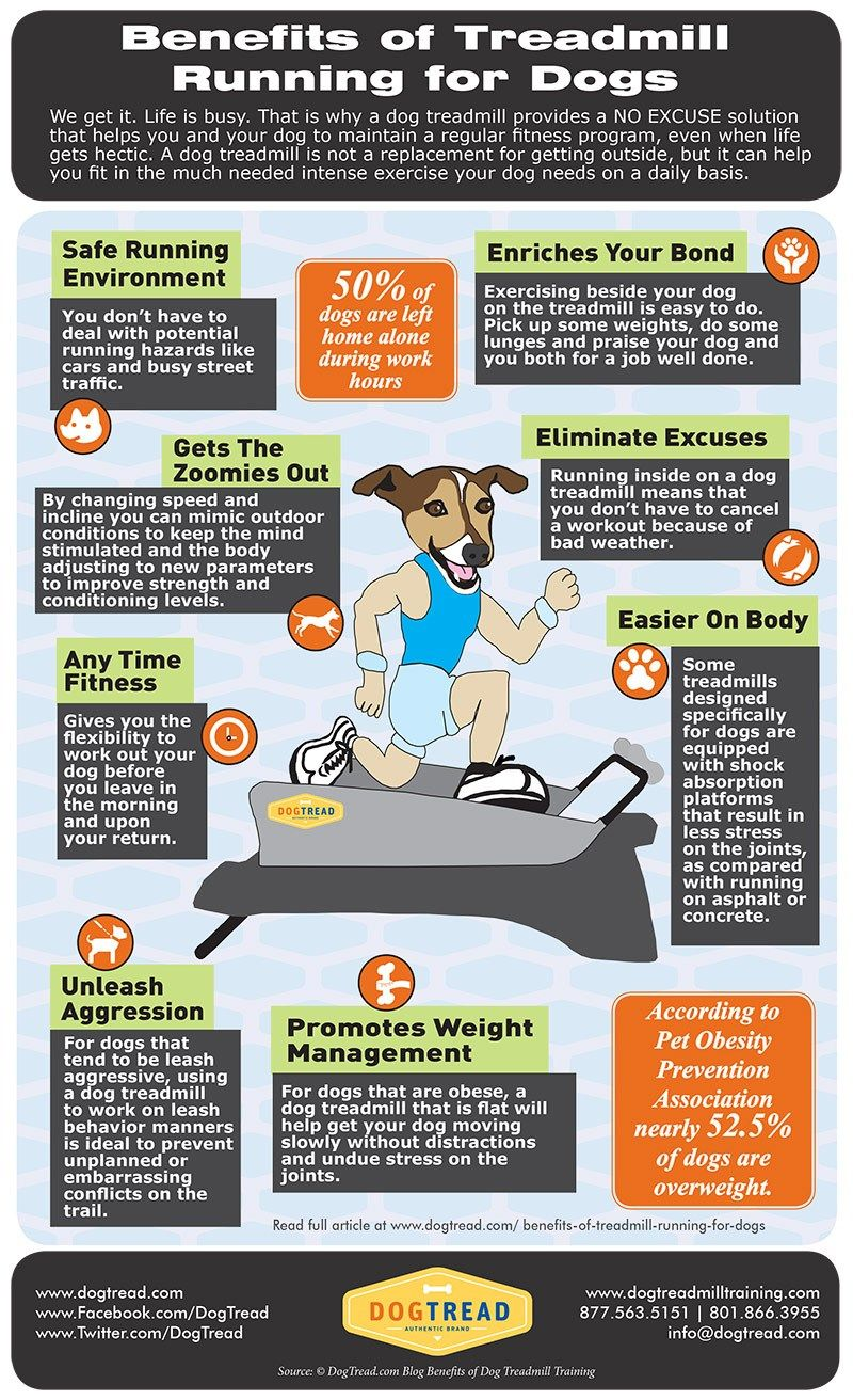 Pin by Coral Drake on How Much Exercise Does a Dog Need