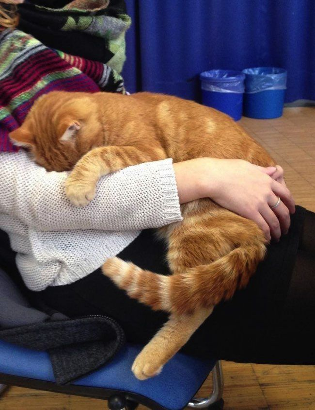 Everyday In Augsburg The Campus Cat Helps Students to Feel Better With Cuddles.