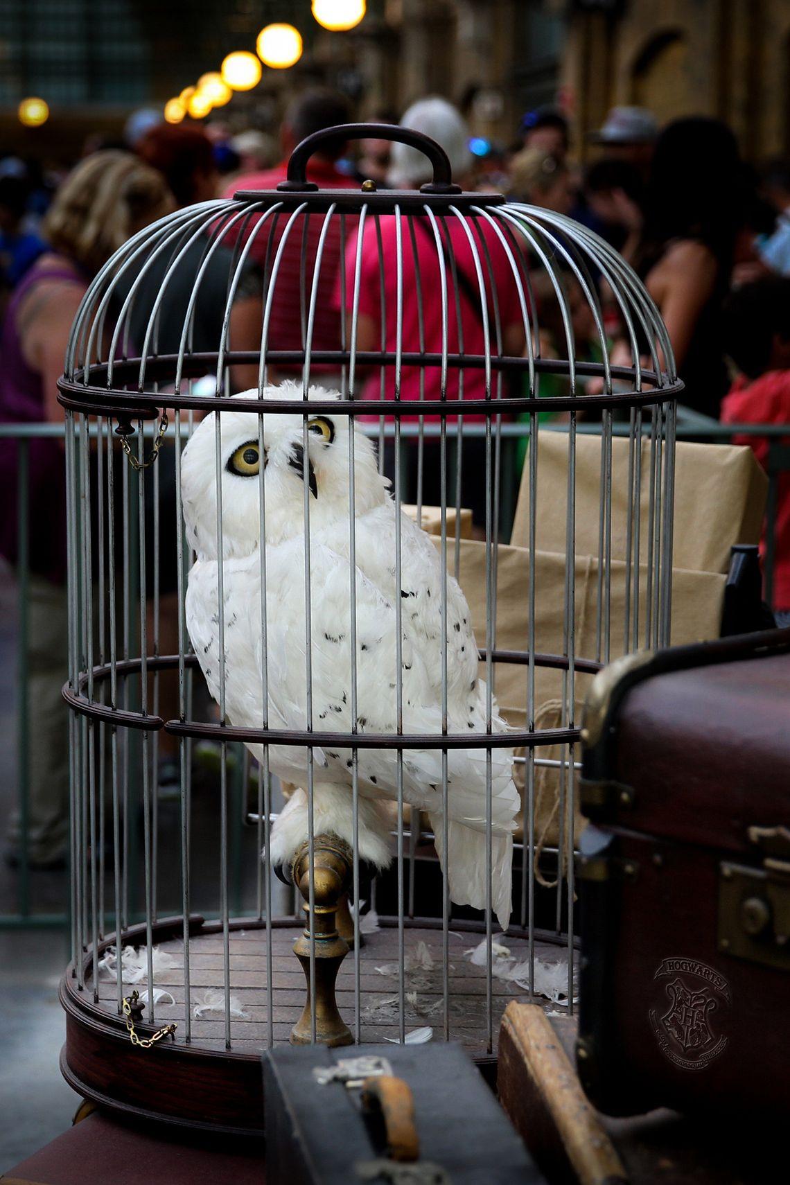 Почтовая сова в мире Гарри Поттера | Гарри поттер, Орландо ...