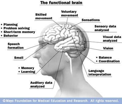 Functions of the brain infographic brain and multiple sclerosis functions of the brain ccuart Choice Image