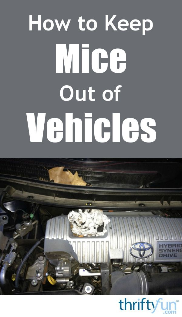 How To Get Rid Of Mice In Car Hood
