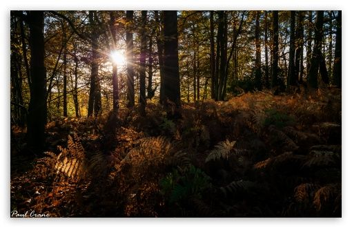 Download Autumn Rays Hd Wallpaper Nature Desktop Wallpaper Desktop Wallpapers Backgrounds Autumn Landscape