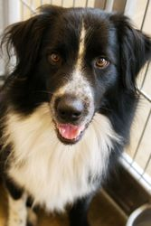 Adopt Dally On Beautiful Dogs Dogs I Love Dogs