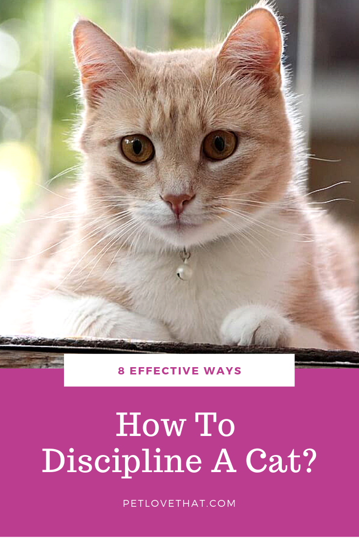 8 Effective Ways How To Discipline A Cat With Images Cats Sleeping Kitten Cat Questions
