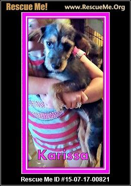 New Jersey Yorkie Rescue Adoptions Rescueme Org Yorkie