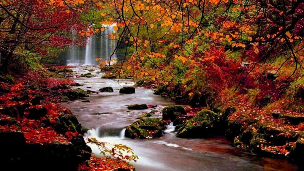 bureau d 39 automne fond d 39 cran hd 1366x768 automne arbres nature paysage feuille feuilles desktop. Black Bedroom Furniture Sets. Home Design Ideas