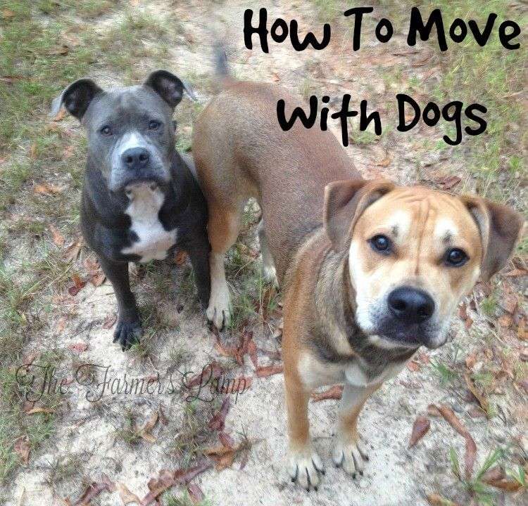 How To Move With Dogs Moving with a dog, Dogs, Your dog