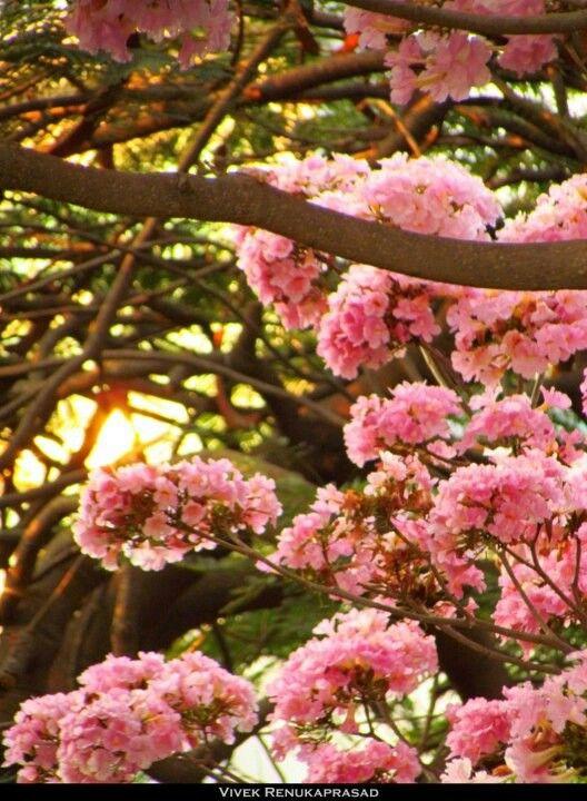 Blooms Of Bangalore Plants Bloom Flowers
