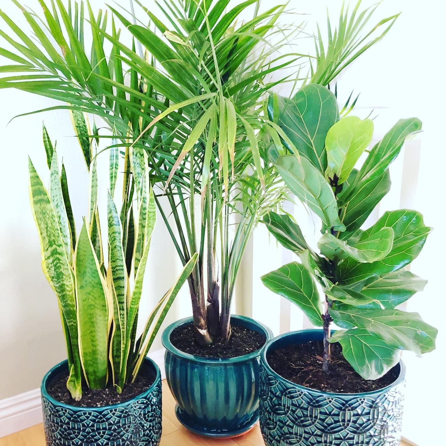 The perfect set of plants for a new ocean air condo