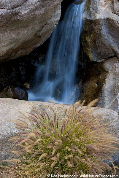 Waterfall At First Palm Oasis Borrego Palm Canyon Anza